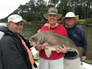three men holding one big black drum fish